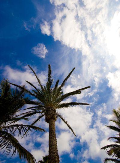 Palm tree and blue sky 2
