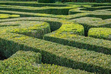 Natural hedge labyrinth maze