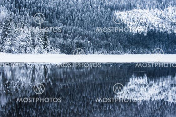 Frosty trees reflected in water, Norway.