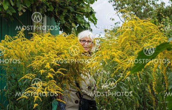 gula höga blommor