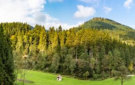Black Forest Scenery Panoarama