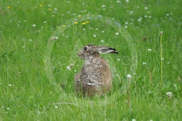 Rabbit chewing a flower