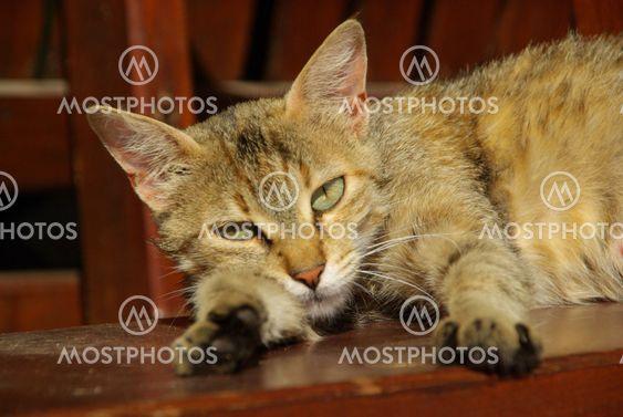 Katze - cat 17