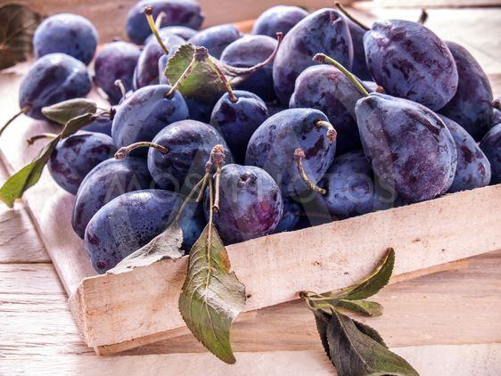 Plums of blue in a box on a wooden background