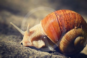 Beautiful snail with shell in nature. Natural colorful...