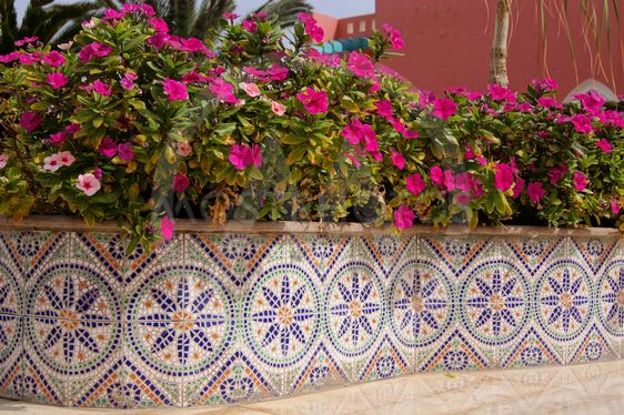 Ceramic tiles and pink flowers