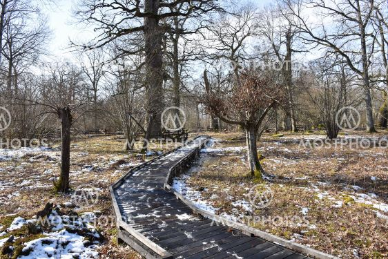Vårvinter i naturreservatet Halltorps Hage på Öland
