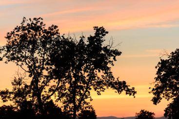 Un árbol con una puesta de sol al fondo