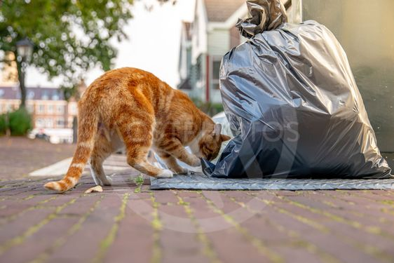 Cat looking for food in the container on city streets