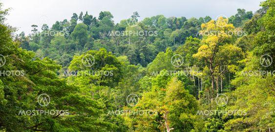 Rainforest trees nature background