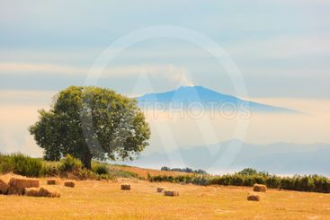 View on Etna from Aspromonte field