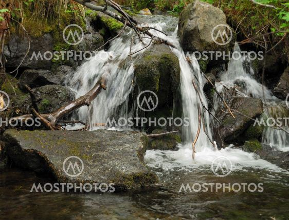 Creek i en vildmark skog