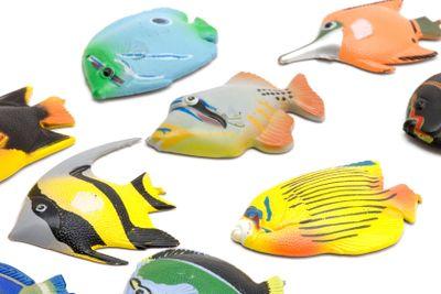 Set of Fish magnet close up