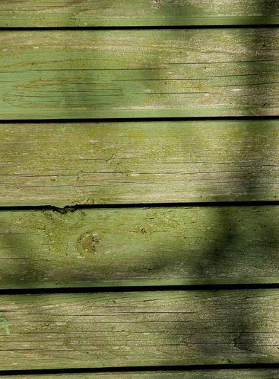 grön vägg