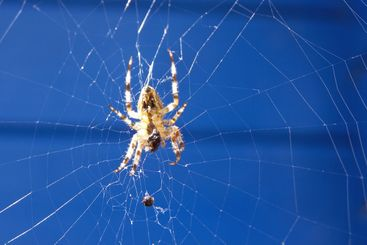 Spider In The Web