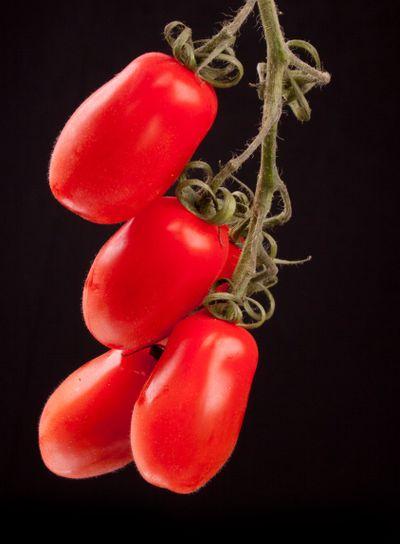 Romano tomato