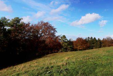 Little meadow in front of a forest in the Eifel Germany