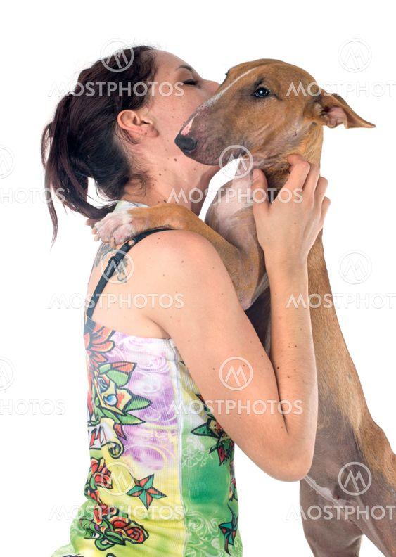 bull terrier and girl