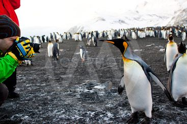 photographing penguin