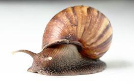 Old Snail Macro