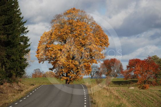 Höstmotiv i oktober  (Sweden)