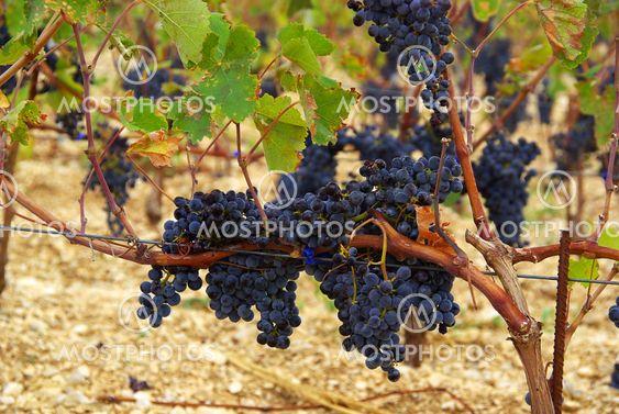 Wein 19
