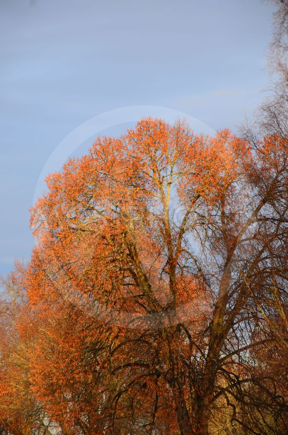 Træer i vinteren farver