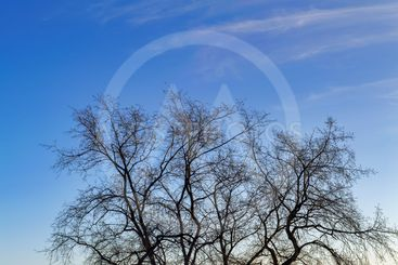 Leafless tree branches on a background of blue sky...