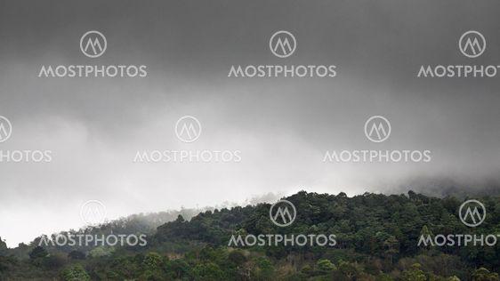 Forest Under Rain