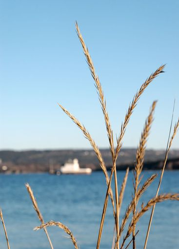 Grass by the Fjord