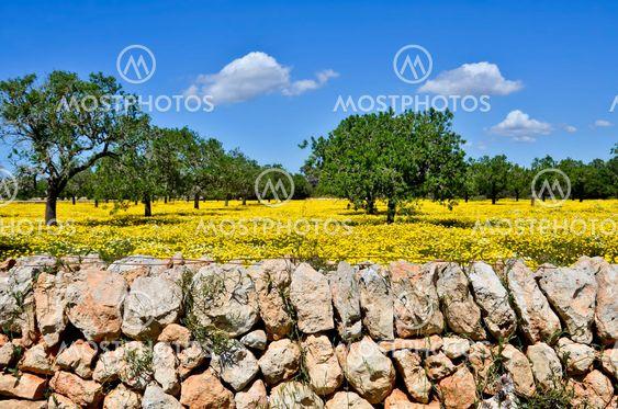 Spring meadow in Majorca