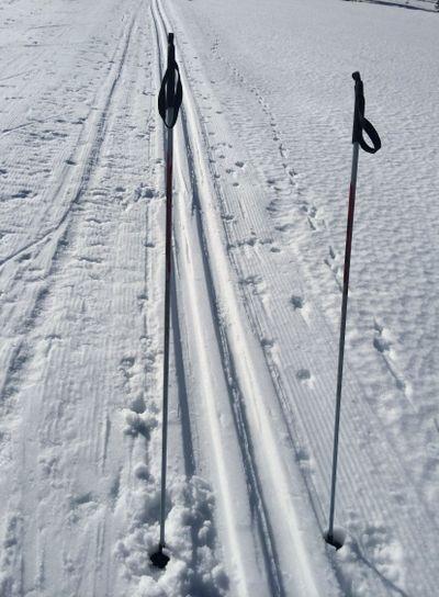 stavar söker skidåkare
