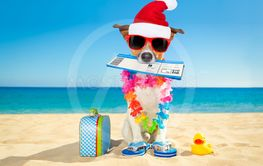 chek in boarding pass christmas winter  dog