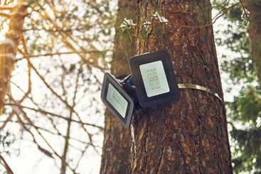 Tree-mounted led spotlight on the pine trunk in the...
