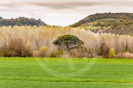 The Chianti landscape
