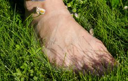 Bare foot woman leg in dewy morning lawn