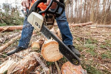 Logging, Worker in a protective suit with a chainsaw...