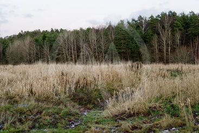 Grassy field in the fall