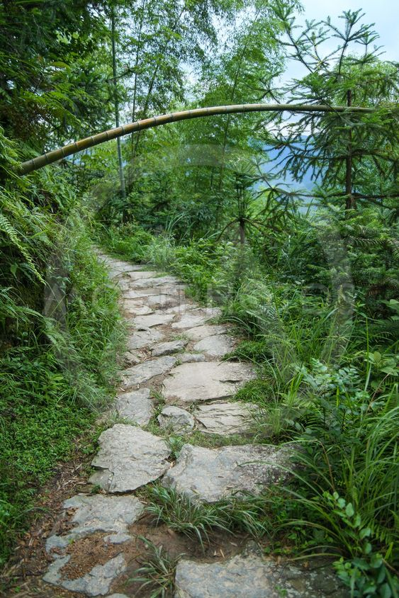 Stone path in chinese forest