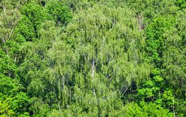 green trees in forest in sunny summer day