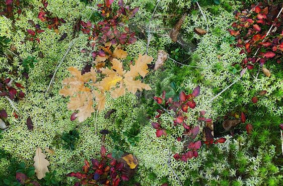 autumn moss forest carpet
