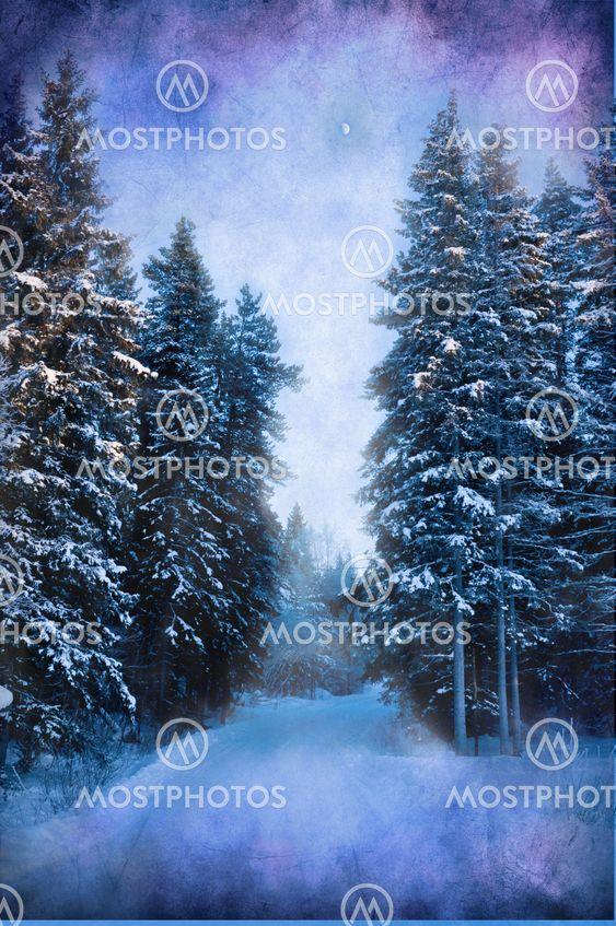 Kolde winterday i skoven