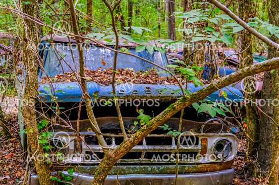 Old Dodge Truck Buried in the Woods