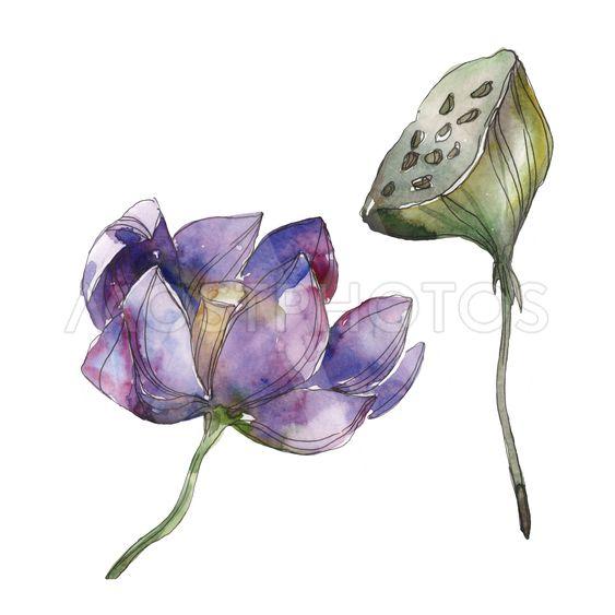 Purple Lotus Foral Botanica By Lightfield Mostphotos