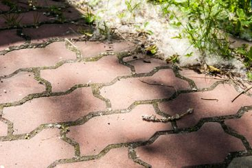 Heat, July. The footpath is paved with red brick paving...
