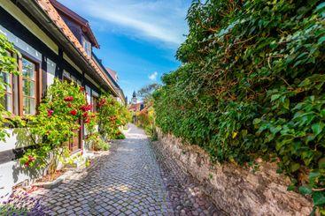 Smal kullerstensväg med hus och ros buskar.