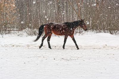 Horse, winter, snow.
