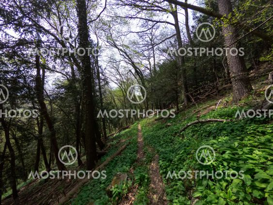 forest hiking trail for hiking