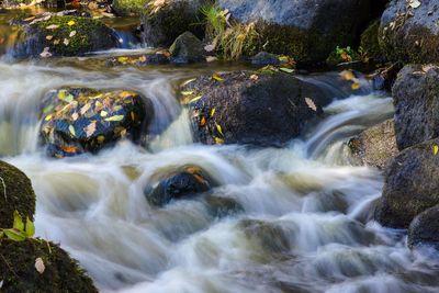 Autumn in the stream