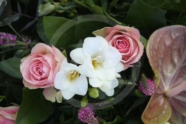 pink roses and white freesias